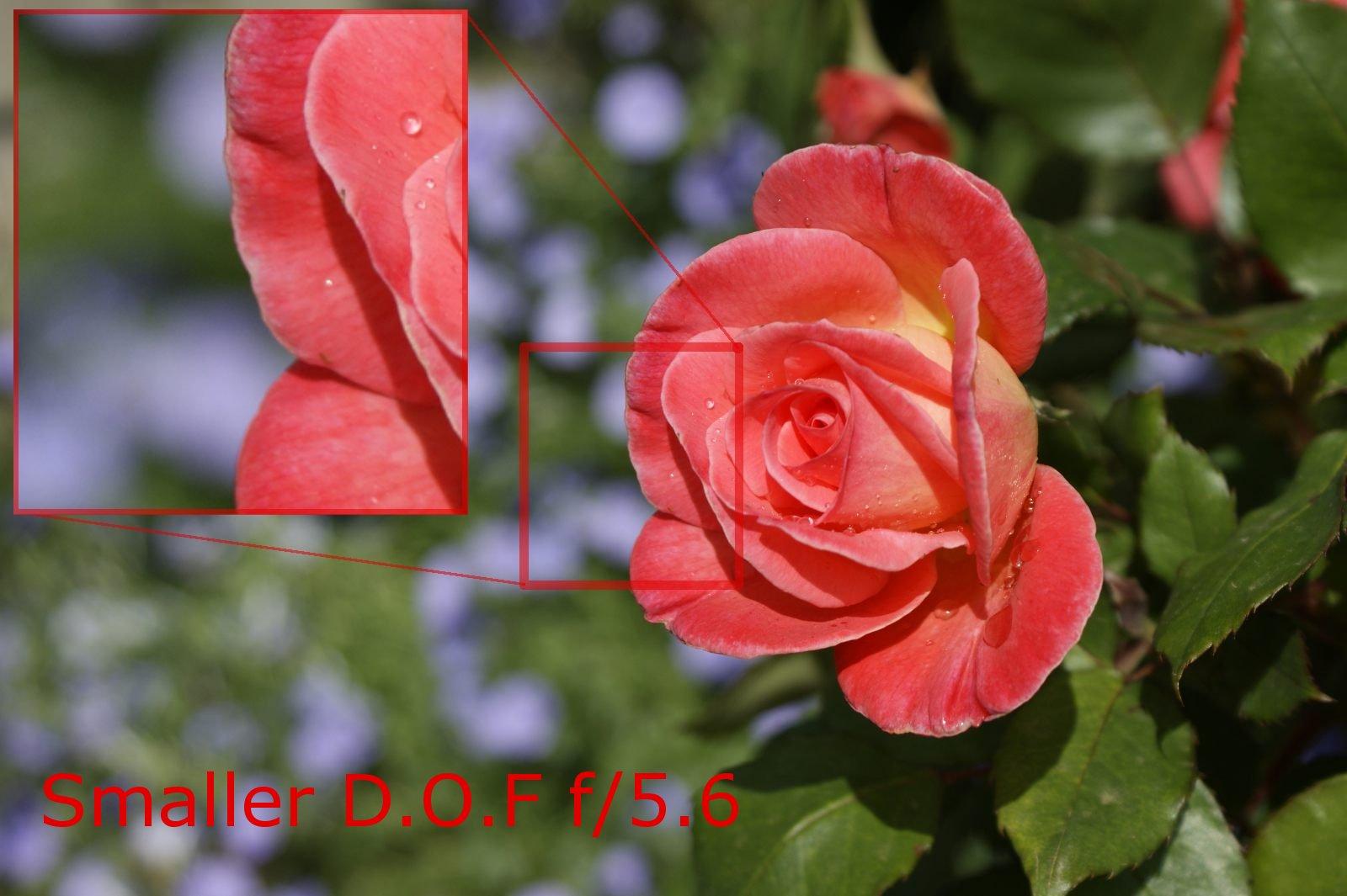 Shallower D.O.F f/5.6